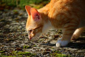 cat-1183142_1280